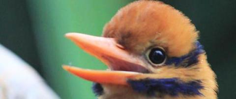 Biolog fotograferte den uhyre sjeldne fuglen for f�rste gang. S� drepte han den