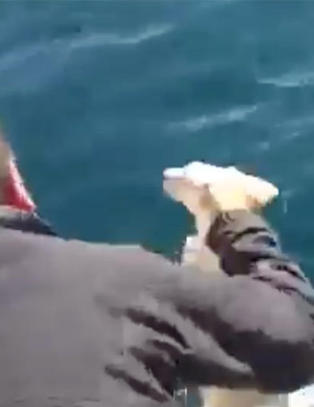 Her redder seilerne den utmattede valpen opp fra havet