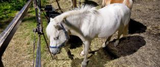 Glemt av de r�dgr�nne: N� m� rideskolen slakte dyr