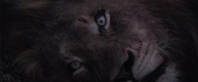 Tok 15 000 stillbilder p� safari: - Guidene syntes jeg var gal