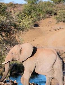 Tok 15 000 stillbilder på safari: - Guidene syntes jeg var gal