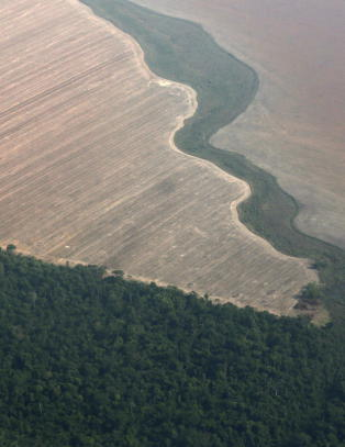 Avskogingen i Brasils jungel skyter ny fart