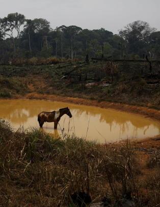 Venstre advarer mot klimakvoter fra regnskog