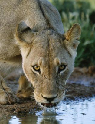 Skal bore etter skifergass i Botswanas nasjonalpark