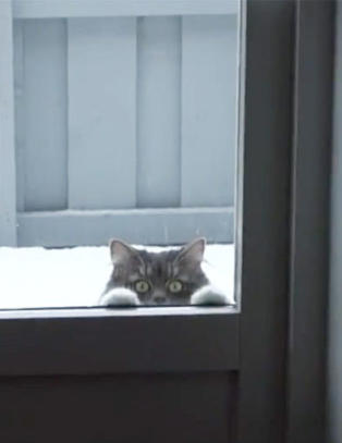 Derfor elsker vi kattevideoer p� sosiale medier