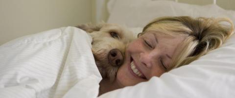 Et kj�ledyr i senga kan gj�re at du sover bedre