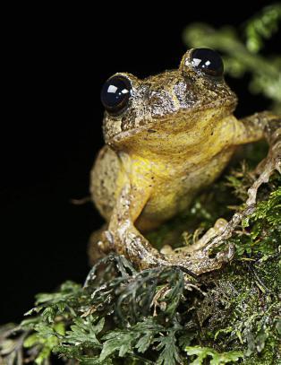 Denne frosken hadde ingen sett p� 150 �r