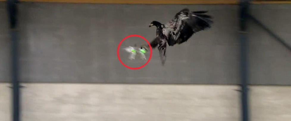 �rn fanger farlige droner i luften som om de var bytte