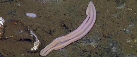 Mysteriet om �den lilla sokken� i havet er l�st
