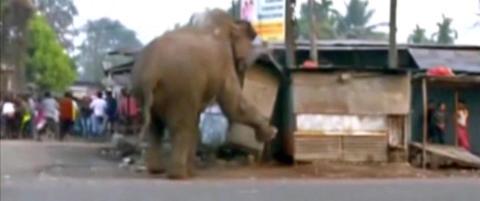 Redd elefant gikk berserk etter at den forvillet seg inn i landsby i India