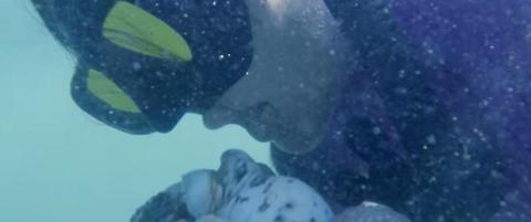 Ekstremdykkeren Kimi dreper blekkspruter med bare tennene