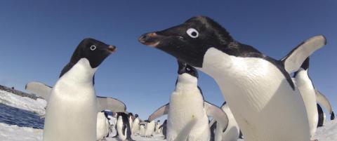 150 000 pingviner d�de p� grunn av kjempeisflak