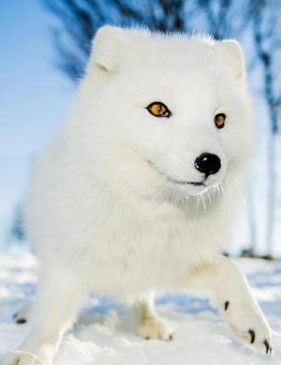 Disse dyra er i ferd med å bli utryddet i Norge