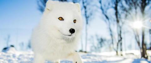 Disse dyra er i ferd med � bli utryddet i Norge