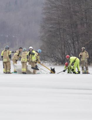 Geir og hoppa Urd (6) gikk gjennom isen. Ble reddet av hesten som gikk i bånd bak dem