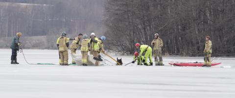 Geir og hoppa Urd (6) gikk gjennom isen. Ble reddet av hesten som gikk i b�nd bak dem