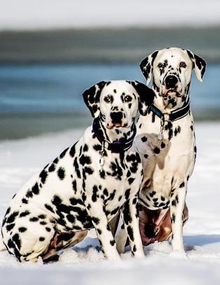 Advarer mot impulskj�p: Dette m� du tenke over f�r du kj�per deg hund