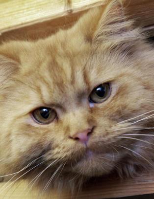 Dødelig kattesykdom oppdaget i nord