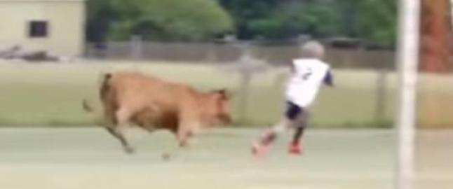 Billy spilte fotballkamp, s� kom oksen p� banen
