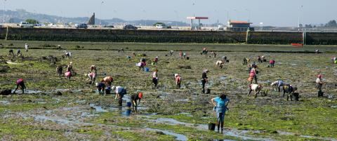 N�r sj�en trekker seg tilbake utenfor den lille galiciske byen, starter kvinnene � plukke hjerteskjell p� stranda