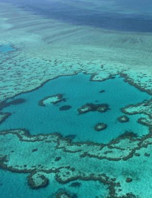 - 95 prosent av Great Barrier Reef er alvorlig bleket, og halvparten kan dø innen en måned