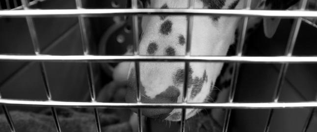 Kj�rlighet med hunden i oppbevaringsboksen?