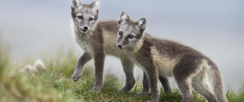 Vinnerne og taperne: Dramatisk for norske dyr og planter