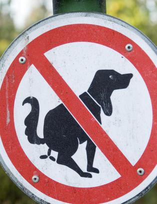 Ordf�reren i Madrid er m�kk lei hundedritt. N� lanserer hun en �sjokk-plan� for � rydde opp