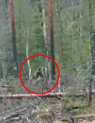 Her g�r bj�rnen til angrep p� elgen