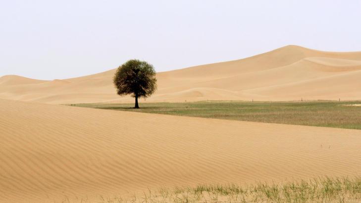 OGSÅ I KINA: Også i Kina har de satt i gang et prosjekt med å bygge en mur av tre for å stoppe ørkenspredning. Bildet viser nyplantet vegetasjon i Indre Mongolia som skal hindre at ørkenen sprer seg til Bejing. Foto: Reuters / NTB Scanpix