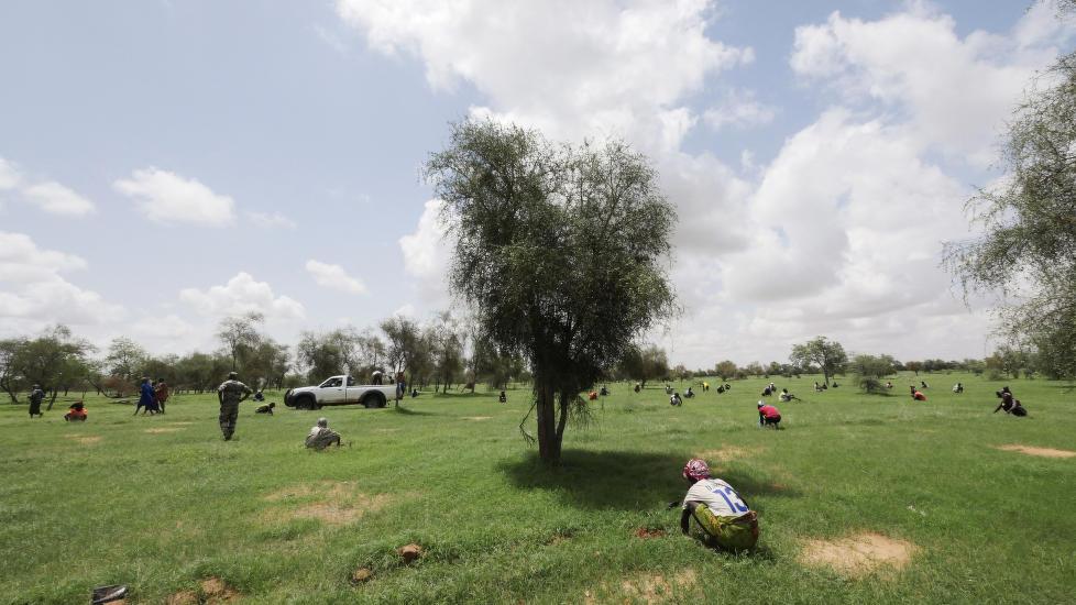 DET GRØNNE HÅPET: Den store grønne muren skal gå langs den sørlige grensen av Sahara. Hittil er hoveddelen av treplantingen utført i Senegal, men også Burkina Faso, Mali og Niger har gjort store framskritt med treplanting som blant annet brukes til medisin og mat. På bildet hjelper soldater med på plante acacia-trær i Senegal. Foto: Reuters / NTB Scanpix