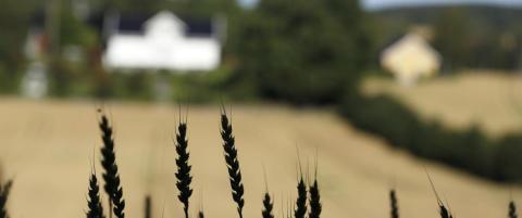 Det er trist at regjeringa meiner det er greitt at bonden har ei inntektsutvikling som er svakare enn andre grupper