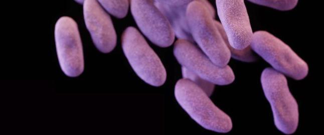 Superbakterie p�vist i USA er resistent mot selv den siste tilgjengelige antibiotika-typen