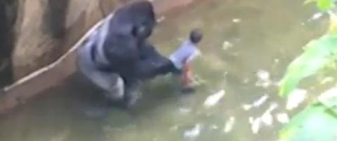 Gorilla ble skutt for � redde gutt (4). N� krever tusenvis at foreldrene stilles til ansvar