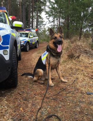 La på sprang etter trafikkulykke - ble funnet av politihunden Gibbs