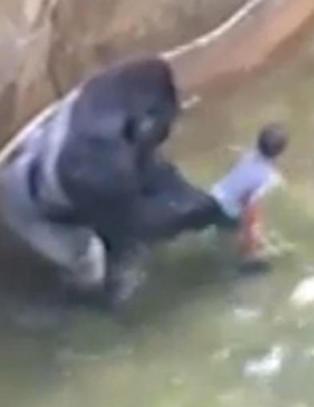 Gorilla ble skutt for � redde gutt (4). Flere hundre tusen krever at foreldrene straffes. N� snakker guttens mor ut