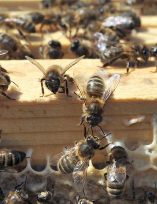 - Ikke sett ut bikuber hvis du vil redde biene