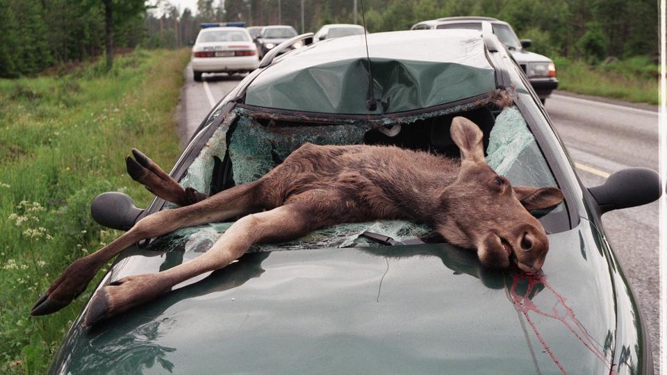 broer i norge sex med dyr