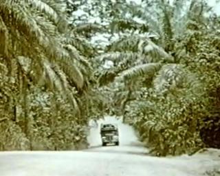 TROPISK: Forholdene forbedret seg da turkameratene kom seg ut av Sahara. Her var det til og med veier � kj�re p�.