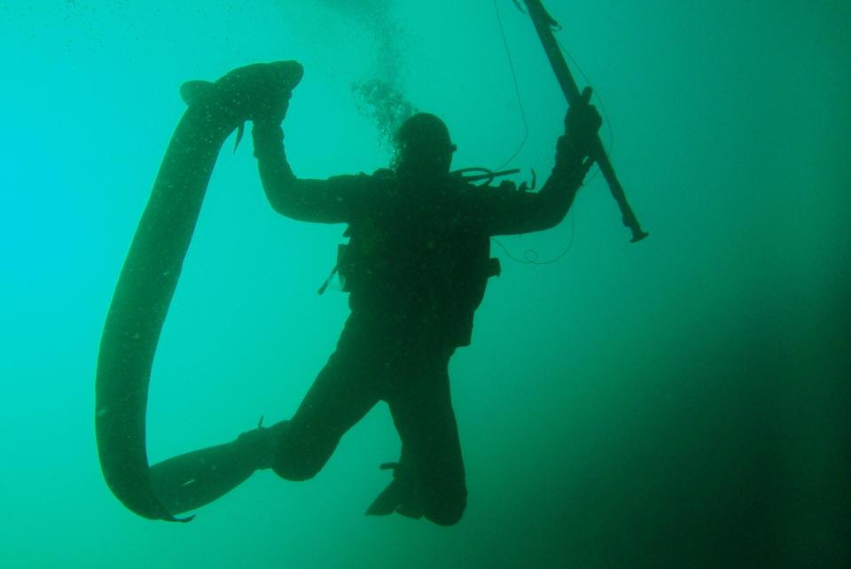 Litt av et møte, slike havåler er sjøens anakonda slange. thumbnail