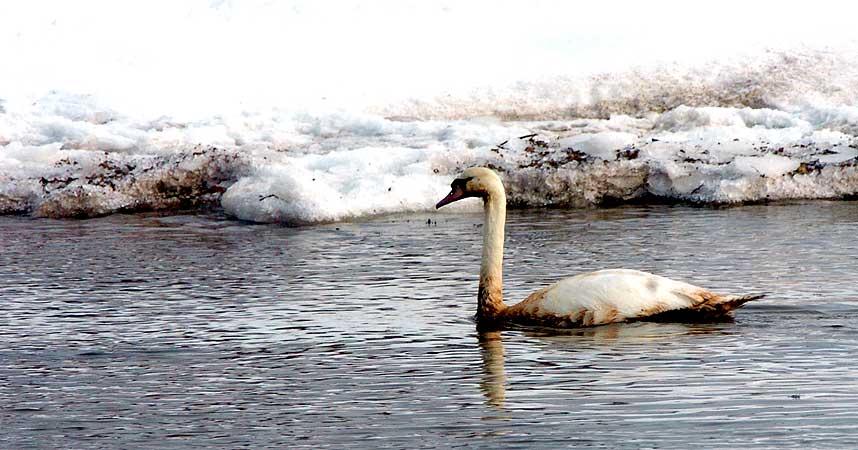 OLJESØL SPRER SEG: Is og kulde gjør redningsarbeidet vanskelig.