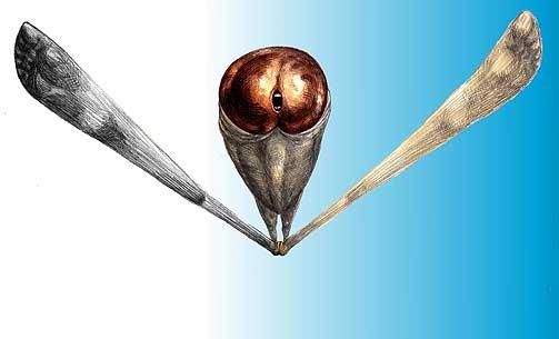 MEN INNI ER VI LIKE: Penisst�rrelsesforskningen har lite kvalitetsempiri � st�tte seg til. Forestillingene om ulike folkegruppers penisst�rrelser har sitt opphav i myter.