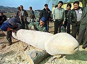 SKULPTURKONKURRANSE: Her spikkes en kjempepenis i tre i S�r-Korea. Trepeniskonkurransen har r�tter 400 �r tilbake i tid.