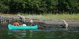 GODE HJELPERE: En familie hjelper noen av sauene p� land.