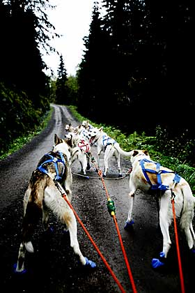 «BARE MEG OG FLOKKEN»: Bjørn Gabrielsen lever for og med huskyhundene sine. Treningsturene legger de ofte til natta - for å unngå å møte  Nordmarkas mange turgåere.