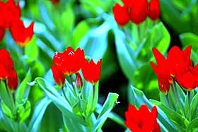 GRØNT: Ordet er språkhistorisk knyttet til spiring og vekst. I tidlig gresk poesi står khloron for visse saftfylte livstilstander. Først etter hvert ble det samme ordet en abstrakt betegnelse for grønt utseende.