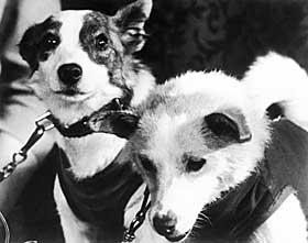 SENDTE MANGE HUNDER OPP ETTER LAIKA: Sovjetrusserne sendte blant andre opp hundene Strelka og Belka. De gikk i bane rundt jorda i Korabl-Sputnik-5 i august 1960, og kom tilbake i god behold.