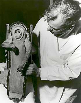 N�DDE IKKE VERDENSROMMET: Amerikanerne fors�kte med apen Sam i 1959, den n�dde bare 88 kilometer, verdensrommets grense g�r ved 100 kilometer. Apen var imidlertid vektl�s i tre minutter f�r den kom tilbake til jorda.