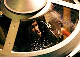 FORSATTE MED APER: Apen Multik i kapselen sin f�r oppskyting i 1996. Bakterier, snegler og fluer var ogs� med i bane rundt jorda.