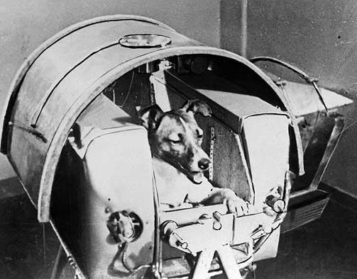 FIKK KORT TID I VERDENSROMMET: Antakelig d�de Laika etter 5 - 7 timer i rommet. Det var heller aldri planen at hunden skulle komme til jorda igjen i live.